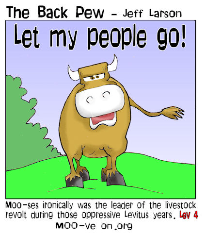 this bible cartoon features a bull named MOOses who led a revolt in Leviticus 4 (maybe)